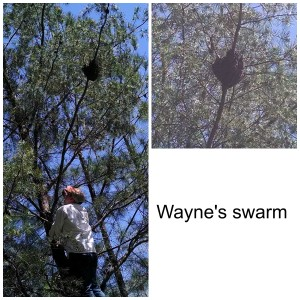 Pictures from Wayne